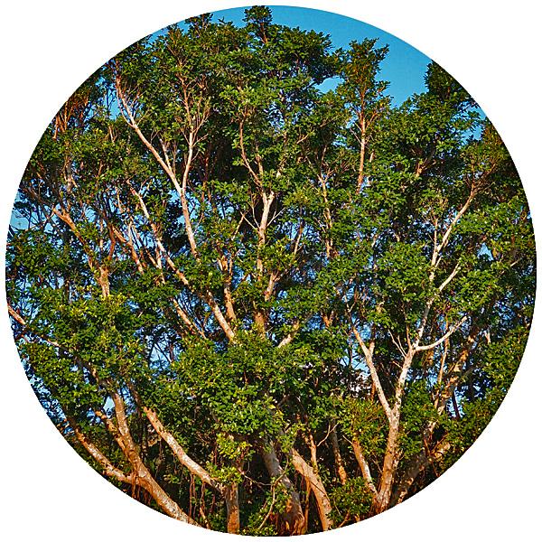 tree_0_1228.jpg