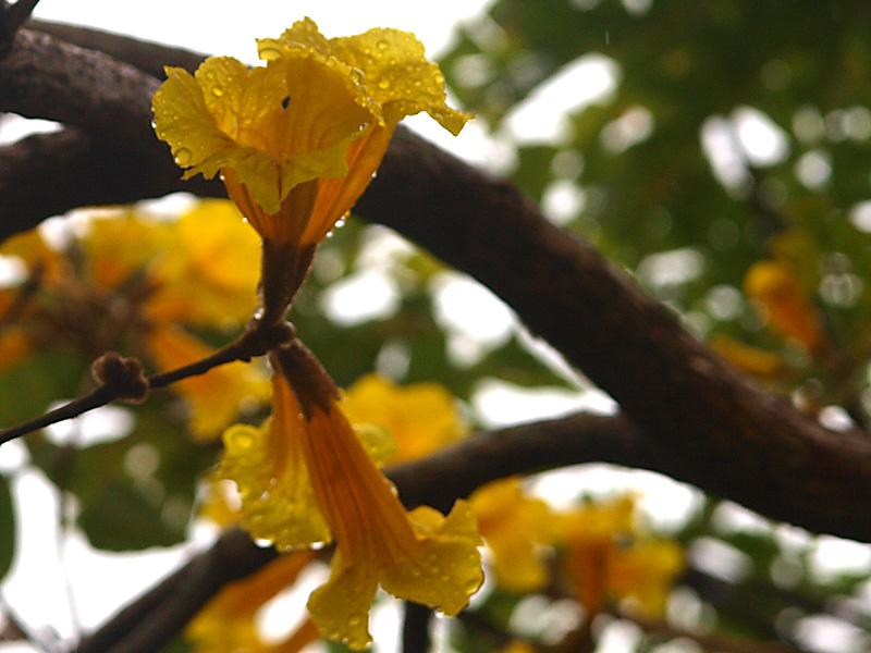 ipe_raindrop1.jpg