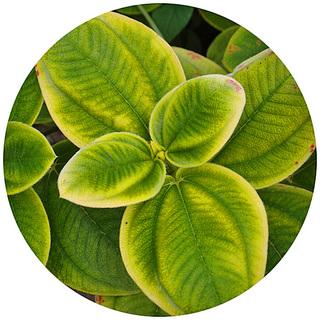 leaf_1206-0.jpg
