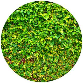 leaf_wall_1206-0.jpg
