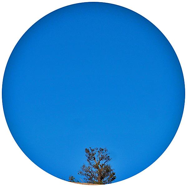 tree_loof_0_1228.jpg