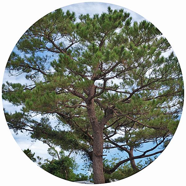 pinetree_kitatama_0.jpg